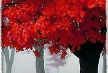 Take time to catch the falling leaves ~ Autumn