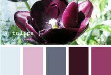 Colours + Palettes