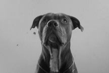 Dogs / by Meike from Bull Design