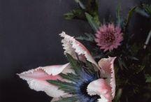 flora & fauna / by Sandi Terry