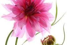 Pretty Petals / by Valerie Veron