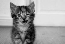GAAHHH <3 / explosion of adorable. = gaaahhhhh <3