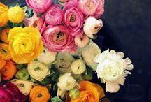 Fresh Bouquets / by Marge Anna Quinn