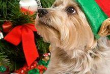 Holiday Books / Christmas and other holiday novellas
