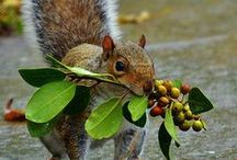 Squirrel・Chipmunk/リス・シマリス / Welcome! My [Spark joy Bookmark] to :D    Thank you for visiting!