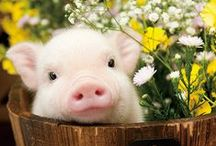 Animal/動物 / Welcome! My [Spark joy Bookmark] to :D    Thank you for visiting!