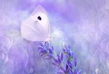 Photo Softness/柔らかな写真 / Welcome! My [Spark joy Bookmark] to :D    Thank you for visiting!