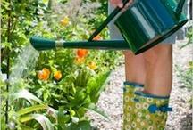 Gardening / by Rachel Whetzel