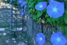 dream garden / Some day