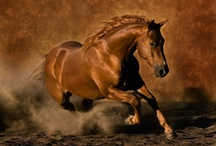 Horses / by Jackie Partain