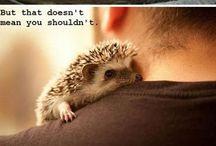 Lexi the Hedgehog / Inspiration for my pet Hedgehog Lexi / by Kaitlyn Profeta
