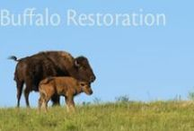 The Tanka Fund / The Tanka Fund is a national campaign to return buffalo to the land, diets and economies of American Indian people.  www.tankafund.org