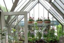 greenhouse gorgeous