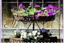 Garden Journal / Watching a garden grow during the year