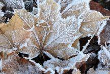 Season - Winter / by Gwen Crivello
