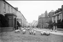 Old Photos of Ireland / See how Ireland looked from the late 1800's onwards