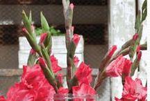 Gladiolen / Gladiolen ontdek je keer op keer opnieuw. Deze bloem is bijzonder, omdat die bloeit van beide kanten. Wat is er bijzonder aan deze bloem en wat zijn de trends?