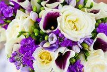 Knallen met paarse tinten! / Bijzonder, apart en heel veelzijdig: paarse bloemen geven uw assortiment een trendy boost.