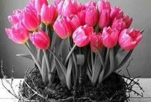 innPhotography / Foto's vertellen de mooiste verhalen over bloemen. Laat je meeslepen in de 'kunst' van bloemen!