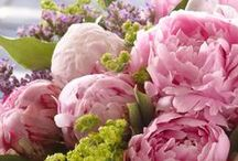 Pioen | Paeonia | Peony / We kunnen ons hart weer ophalen want de Pioenen zijn er! 'Koningin van de zomerbloemen' wordt deze prachtroos wel genoemd. En terecht! Want haar uitstraling is geweldig.