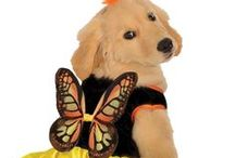 Pets in Costume / Pet Costumes at AnniesCostumes.com