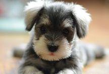Dog Love / by Nancy Ranker Penrose