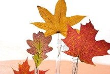 Fall Fascination / My Favorite Season of the Year  ♥