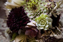 succulents in the garden / by christina {soul aperture}
