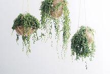 interiors - plants
