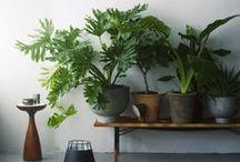Greenhouse / Plants, nature, house, garden, lifestyle