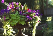 Planters/Containers/Hanging baskets / by Kevin Kelley