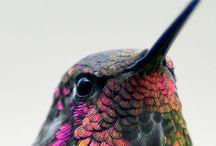 Birds, birds, birds / Squawk