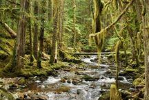 Natural Beauty / by Sunshine Coast Tourism, BC