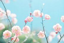 Spring / Fresh, bright, new