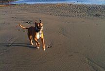 Dogs on the Coast
