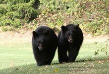 Wildlife on the Coast / by Sunshine Coast Tourism, BC