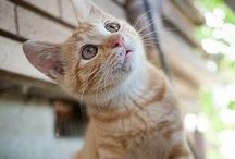 Cat Quotes and Sayings / by Sarah db
