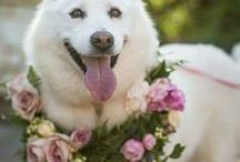 Mochi's Pinterest Board / dog and dog stuff