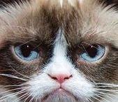 Tardar Sauce, My Spirit Animal / Grumpy Cat's board