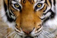 Animals: Wildlife / by Jolanda van Pareren
