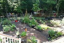 Garden / Cool garden ideas and crops