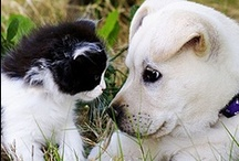 Animals: Cats 'n Dogs