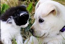 Animals: Cats 'n Dogs / by Jolanda van Pareren
