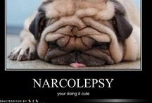 Narcolepsy / by Renata Marie Anselmo