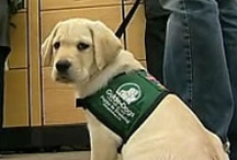 Guide Dogs / Guide Dogs are totally inspiring to me.