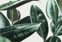 Botanical / Végétale / botanical • vegetable • plants • herbs • organic • spices • herbier • plante • botanique