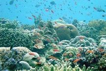 Under The Sea / The beauty and wonder of coral reef beneath the sea.... / by Stephanie Miceli