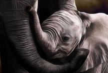 Animals / by Elhan Abramoff