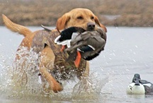 Hunting Pups! / by Emilie Penrose