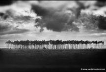 Sander Martens Photography / Recent work © Sander Martens, all rights reserved.
